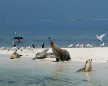 coffs coast travel coates wildlife tours wa
